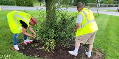 Two people pull weeds by a tree