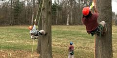 Inmates tend to trees in the SCI Rockview Forestry Camp