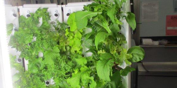 A hydroponics machine with plants growing in it